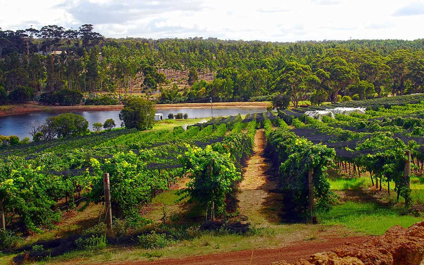 Gorgeous view of the vineyards