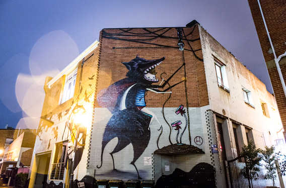 Wolf Lane photo